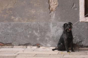 Dog in Italy